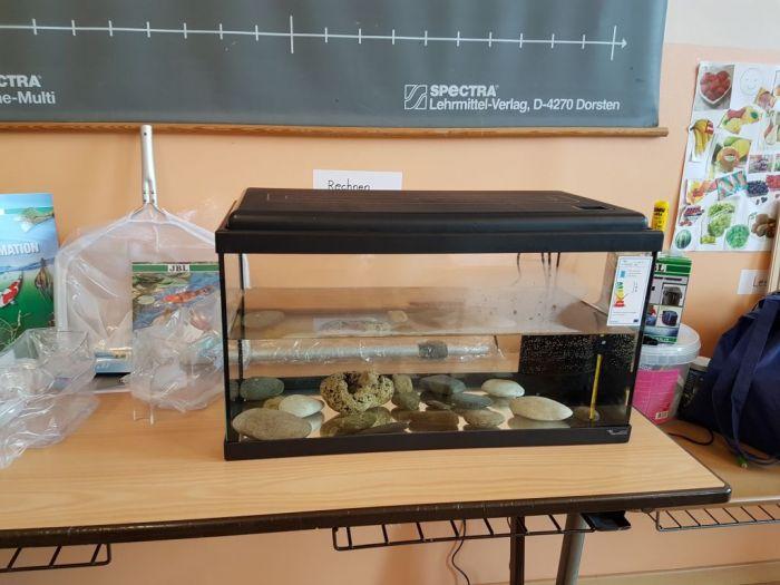 Das Aquarium steht bereit