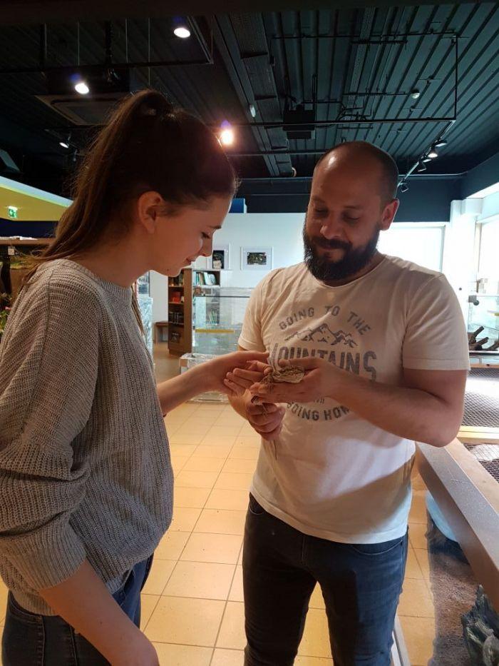 Erster Kontakt mit einer Bartagame