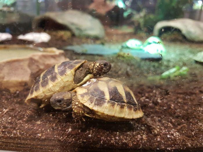 Junge Schildkröten beobachten