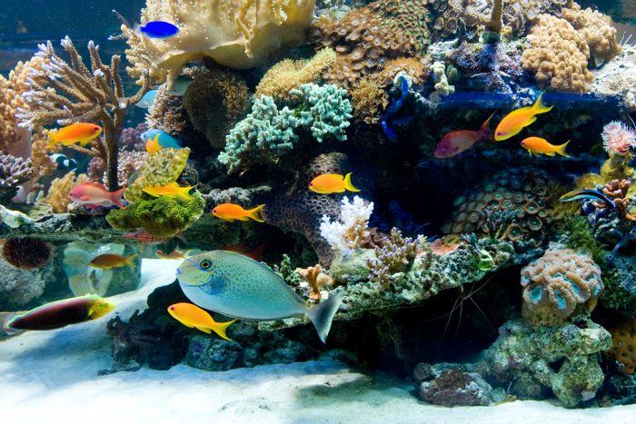 Megazoo Österreich wird einige Arten von Meerwasser-Zierfischen vom Verkauf ausschließen, die nicht für die Heimtierhaltung geeignet oder in ihrem Artbestand bedroht sind - Foto Megazoo