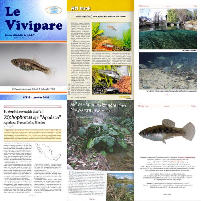 XNP Project publications