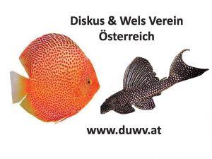 Diskus & Wels Verein Österreich
